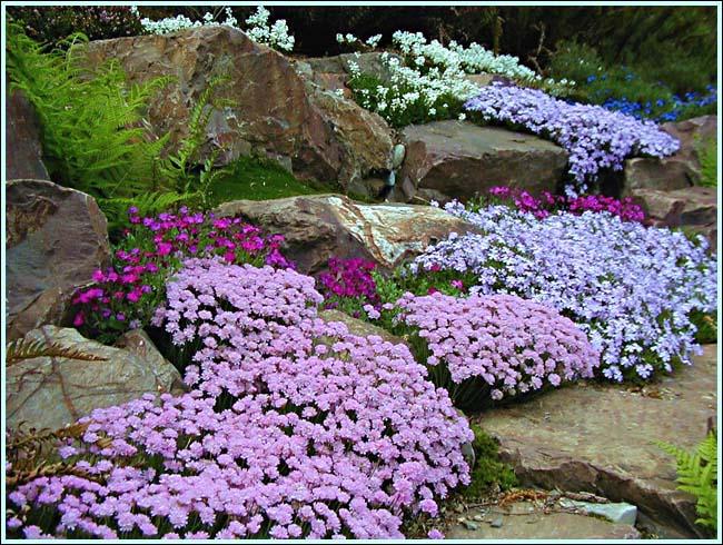 Rock garden ideas flower photograph rock garden photo for Rock flower garden ideas
